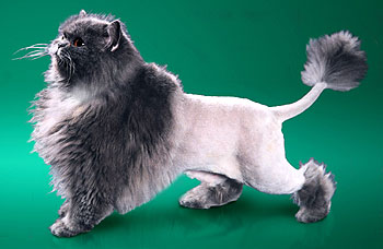 Груминг кошки