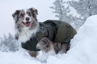 Уход за собакой в холодное время года