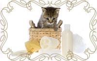 Косметика для котов