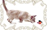 игрушка кошке
